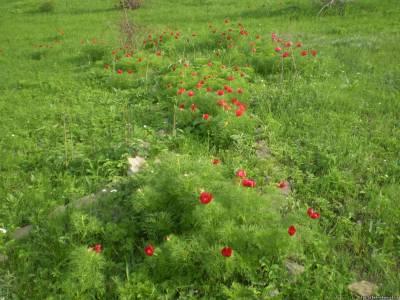 Гектова балка - Природа Добропільського району
